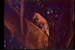 drunken cat paw (2)